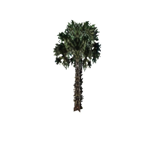 Screenshot of Tree, Arecaceae (Palm), 14m