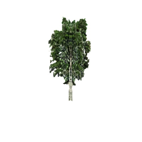 Screenshot of Tree, Betula, Pendula (Silver Birch), 5m