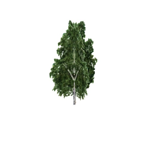 Screenshot of Tree, Betula, Pendula (Silver Birch), 17m