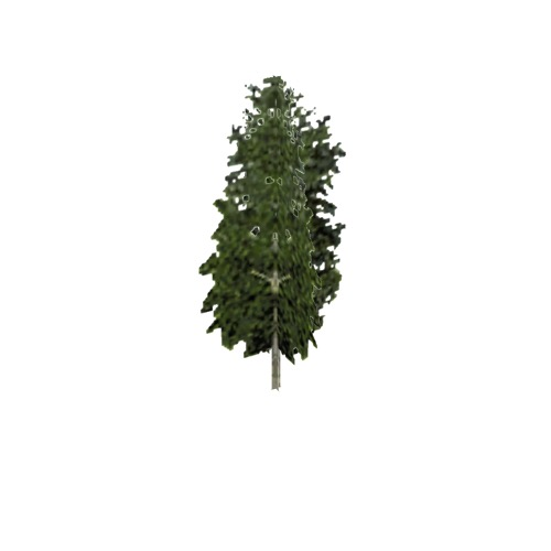 Screenshot of Tree, Betula, Pendula (Silver Birch), 13m