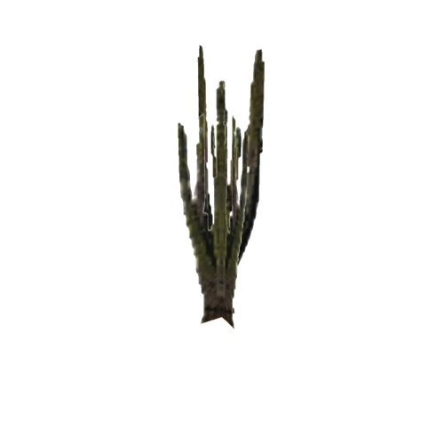 Screenshot of Cactus, Carnegiea (Saguaro), 7m