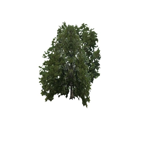 Screenshot of Tree, Celtis (Hackberry), 16m