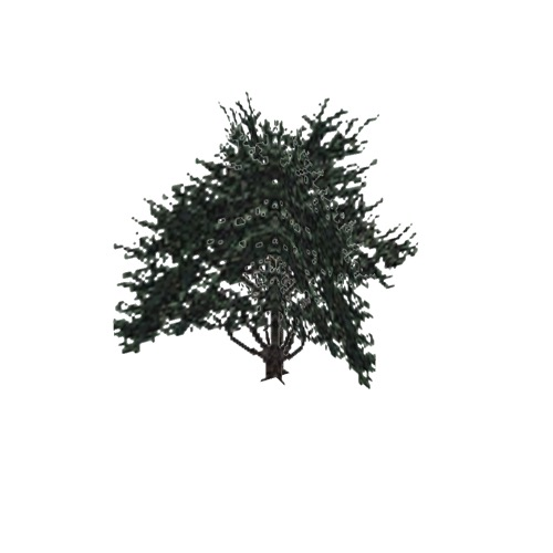 Screenshot of Tree, Cupressus (Cypress), 9m