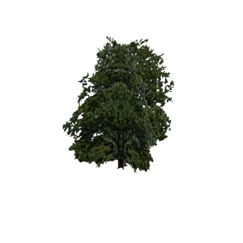 Screenshot of Tree, Fagus (Beech), 22m