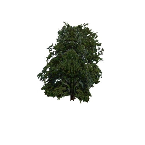 Screenshot of Tree, Fagus (Beech), 24m