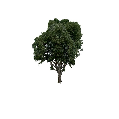 Screenshot of Tree, Fagus (Beech), 21m