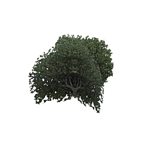 Screenshot of Tree, Ficus (Fig), 4m