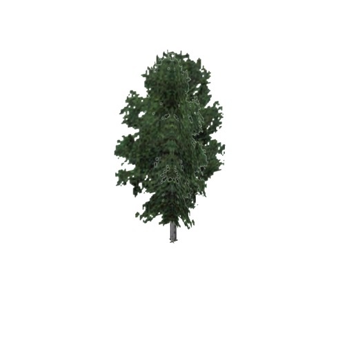 Screenshot of Tree, Fraxinus, Nigra (Black Ash), 12m