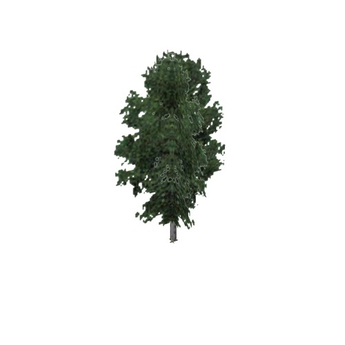 Screenshot of Tree, Fraxinus, Nigra (Black Ash), 17m