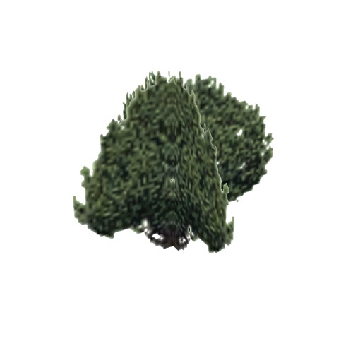 Screenshot of Tree, Juniperus, Californica (California Juniper), 6.5m