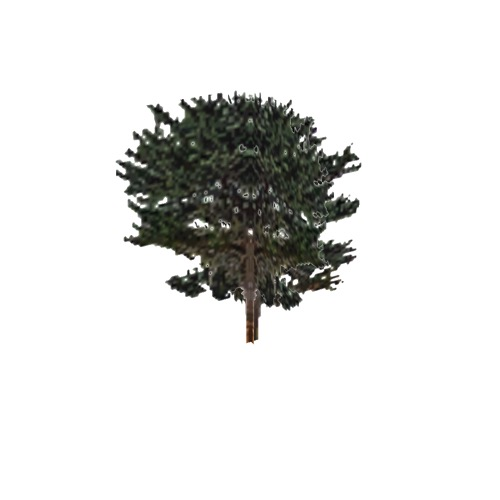 Screenshot of Tree, Juniperus (Juniper), 6m