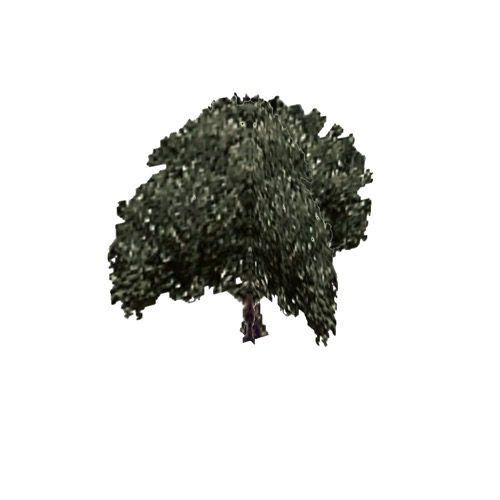 Screenshot of Tree, Olea (Olive), 8m