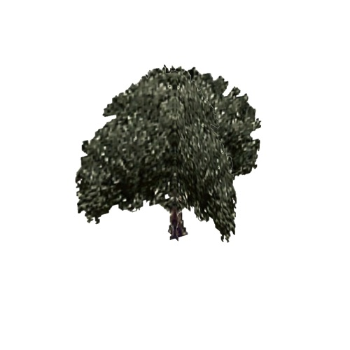 Screenshot of Tree, Olea (Olive), 9m