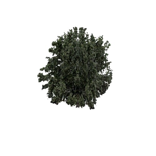 Screenshot of Tree, Olea (Olive), 11m