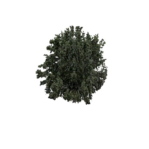Screenshot of Tree, Olea (Olive), 13m