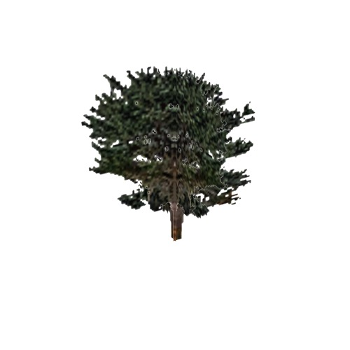 Screenshot of Tree, Pinus (Pine), 9.5m