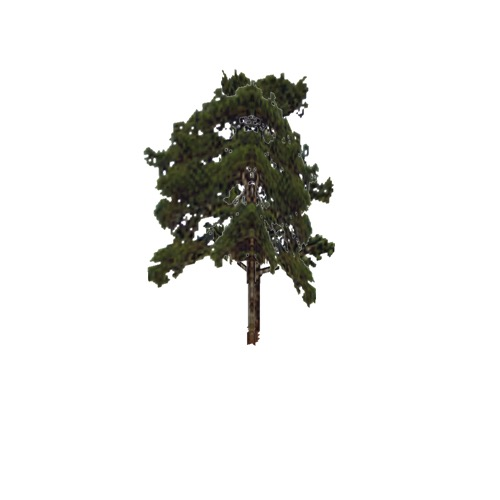 Screenshot of Tree, Pinus (Pine), 25m