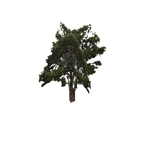 Screenshot of Tree, Pinus (Pine), 17m