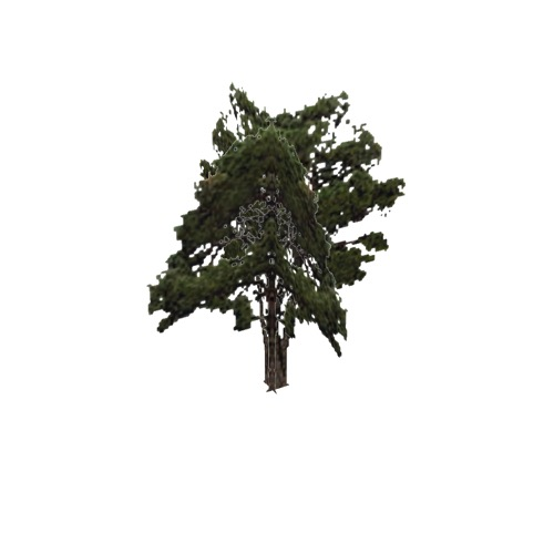Screenshot of Tree, Pinus (Pine), 8m