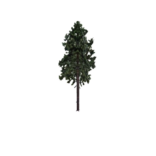 Screenshot of Tree, Pinus, Resinosa (Red Pine), 25m