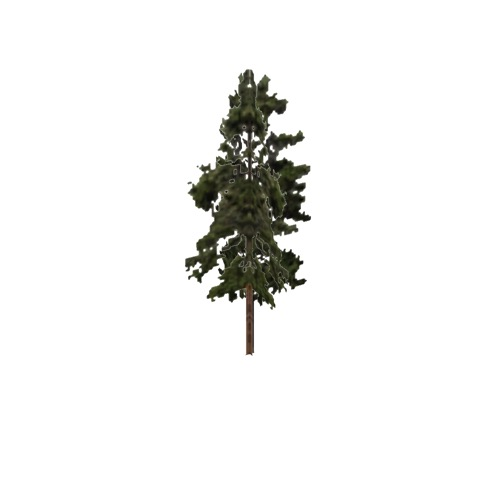 Screenshot of Tree, Pinus (Pine), 18m