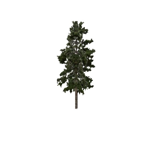 Screenshot of Tree, Pinus (Pine), 21m