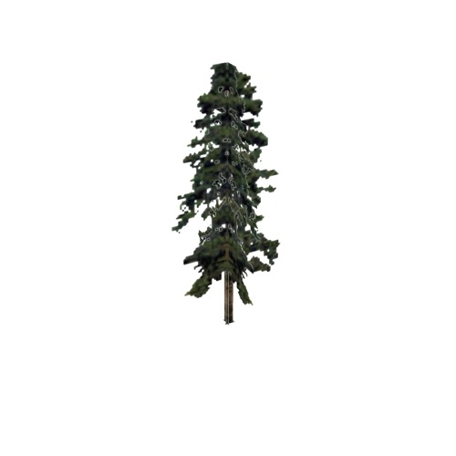 Screenshot of Tree, Pinus, Virginiana (Virginia Pine), 17m