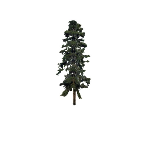 Screenshot of Tree, Pinus, Virginiana (Virginia Pine), 20m