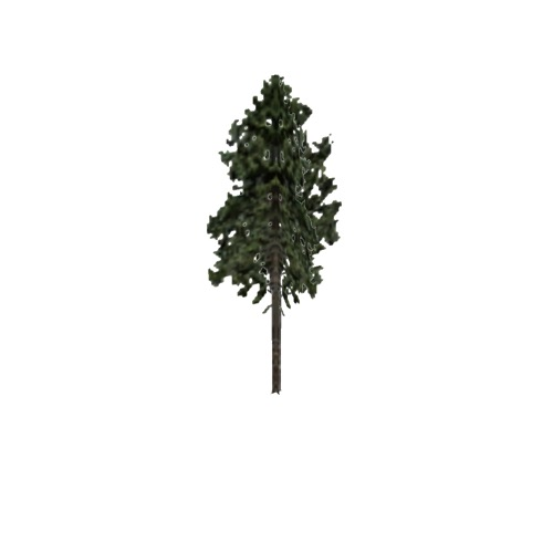 Screenshot of Tree, Pinus (Pine), 27m