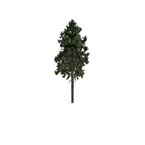 Screenshot of Tree, Pinus (Pine), 30m