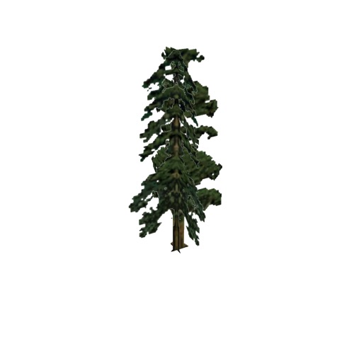 Screenshot of Tree, Pinus (Pine), 23m