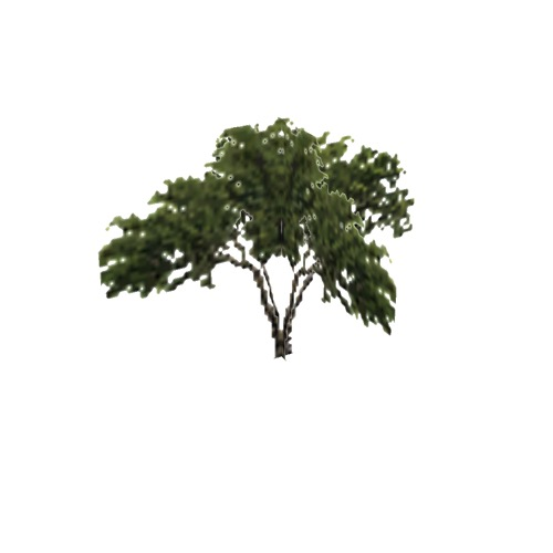 Screenshot of Tree, Prosopis (Mesquite), 4.5m