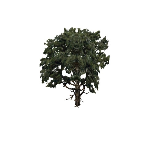 Screenshot of Tree, Quercus, Alba (White Oak), 25m