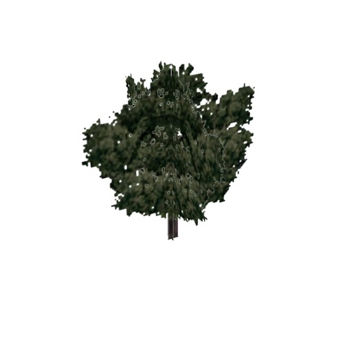 Screenshot of Tree, Quercus (Oak), 7m