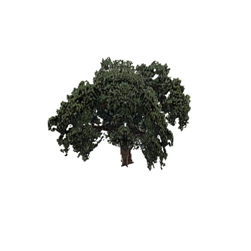 Screenshot of Tree, Quercus (Evergreen Oak), 12m