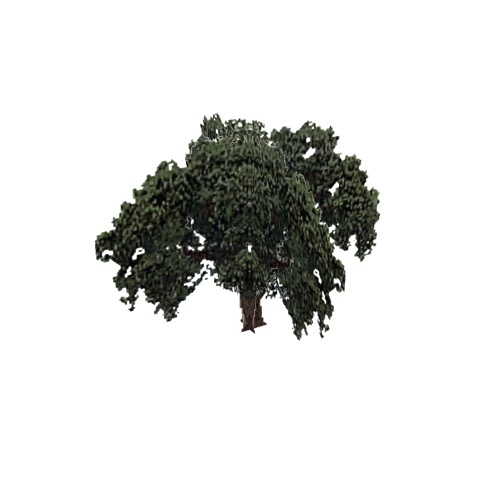 Screenshot of Tree, Quercus (Evergreen Oak), 18m
