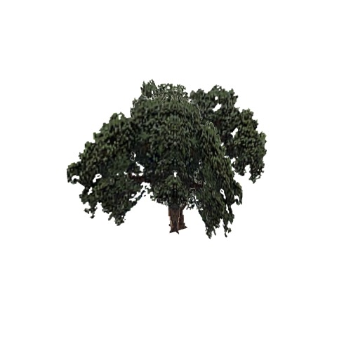 Screenshot of Tree, Quercus (Evergreen Oak), 19m