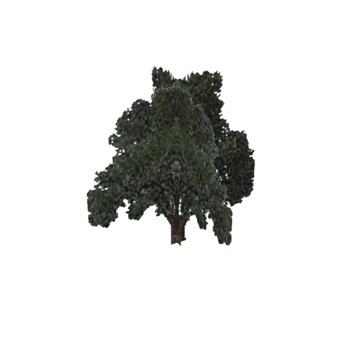 Screenshot of Tree, Quercus, Velutina (Black Oak), 16m