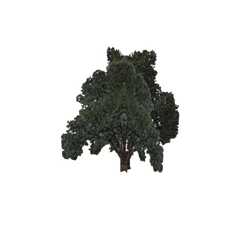 Screenshot of Tree, Quercus, Velutina (Black Oak), 17m
