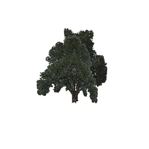 Screenshot of Tree, Quercus, Velutina (Black Oak), 20m